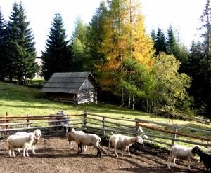 schapen Leonardhutte